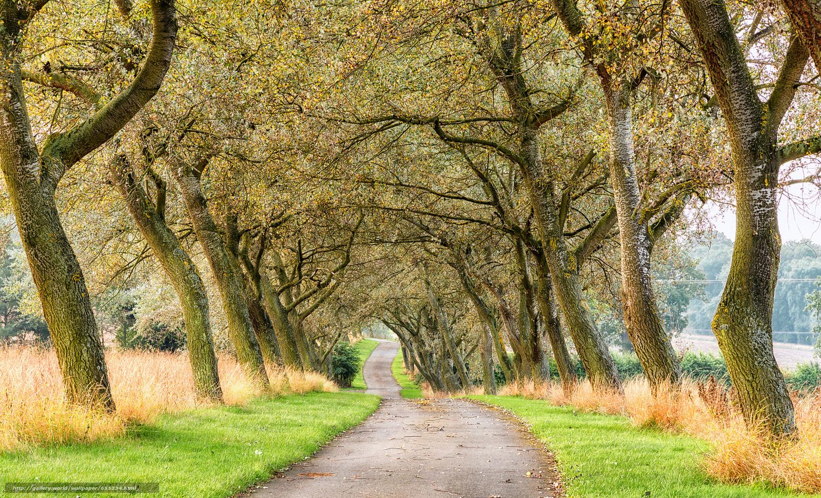 Download wallpaper road,  trees,  landscape free desktop wallpaper in the resolution 2048x1243 — picture №655334
