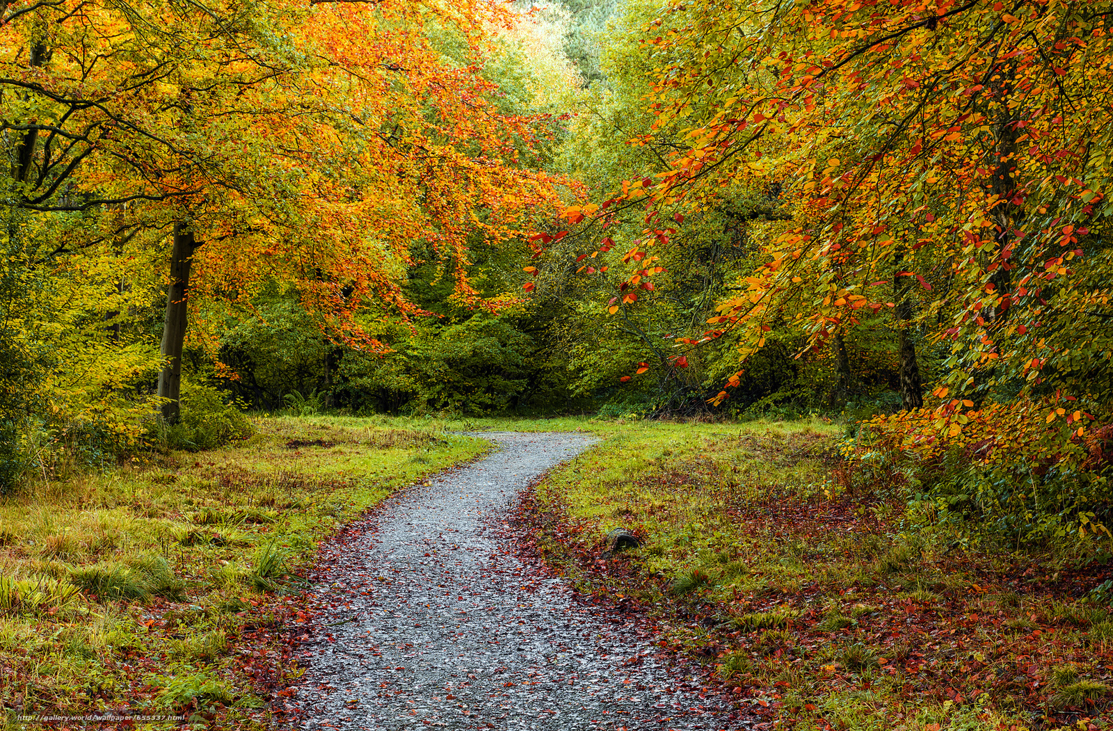 Download wallpaper autumn,  trees,  forest,  road free desktop wallpaper in the resolution 2048x1345 — picture №655337