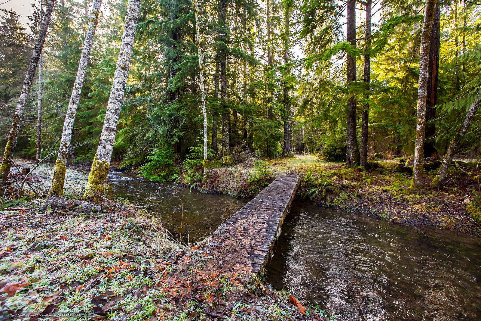 Скачать обои лес,  речка,  мост,  деревья бесплатно для рабочего стола в разрешении 2048x1365 — картинка №655339