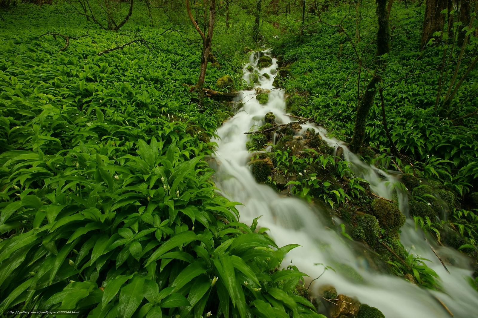 Скачать обои речка,  лес,  растения,  природа бесплатно для рабочего стола в разрешении 2048x1363 — картинка №655348