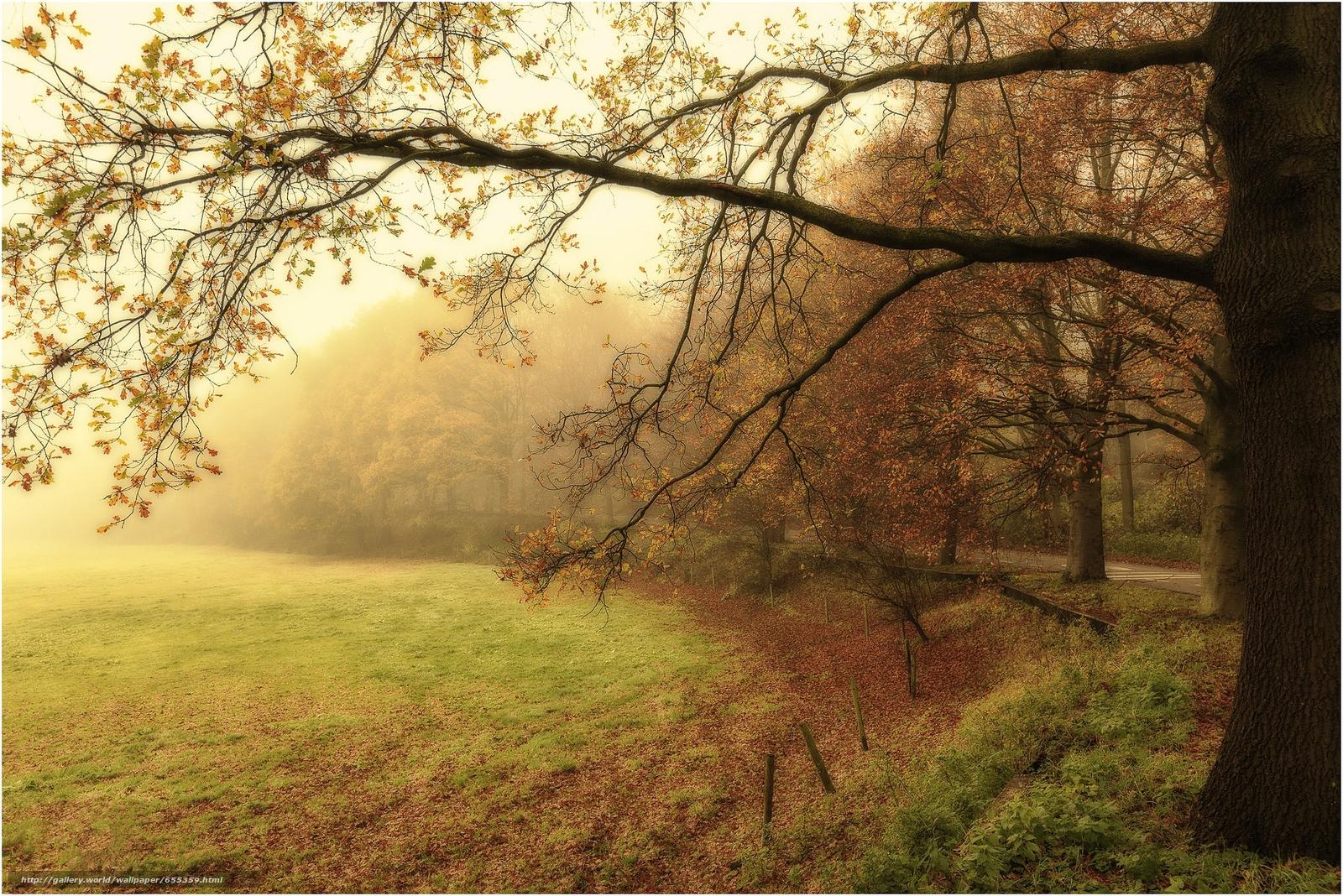 scaricare gli sfondi autunno,  parco,  nebbia,  campo Sfondi gratis per la risoluzione del desktop 2048x1367 — immagine №655359