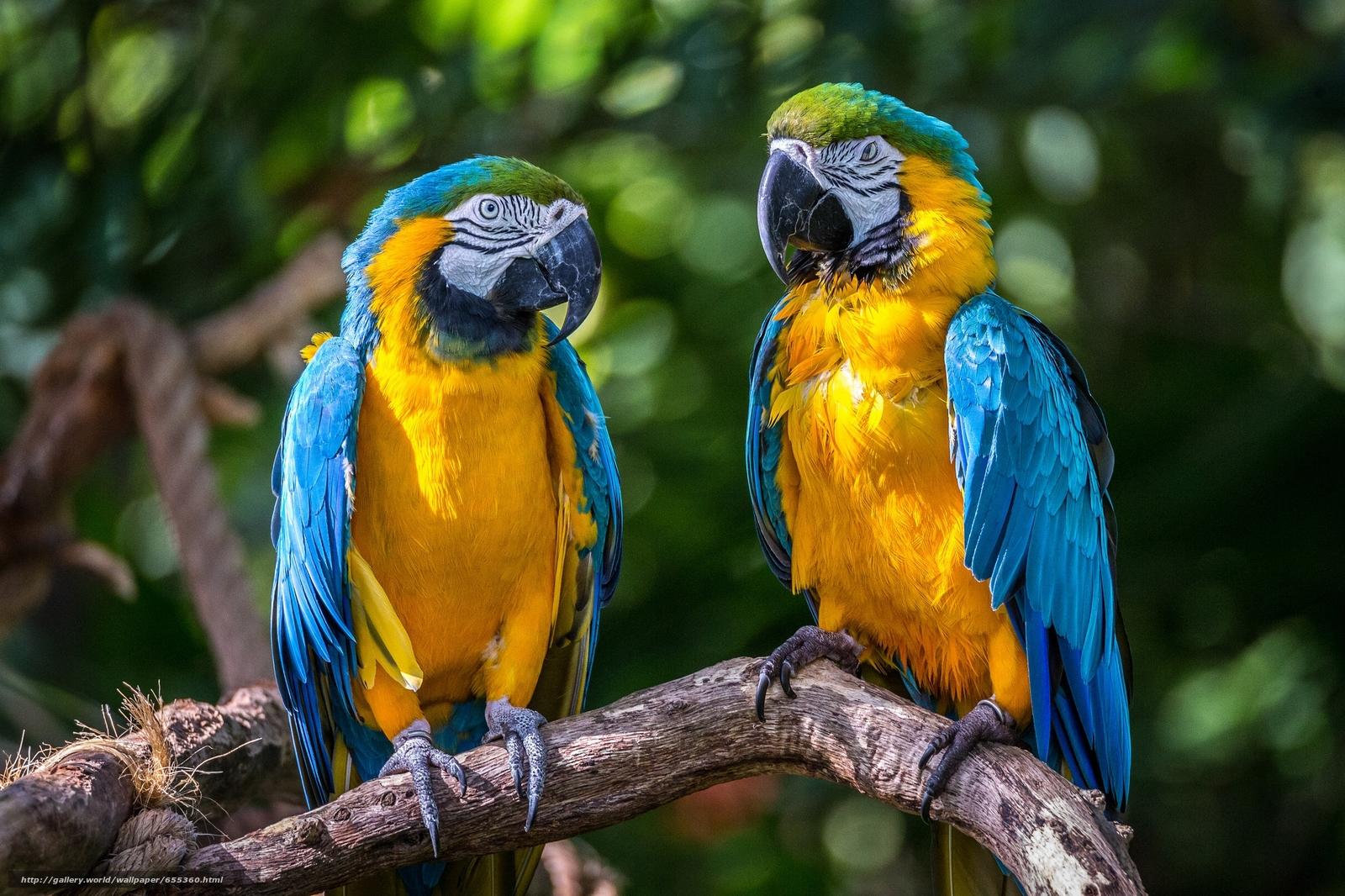 Download wallpaper Blue Macaws,  Parrots,  birds free desktop wallpaper in the resolution 2048x1365 — picture №655360