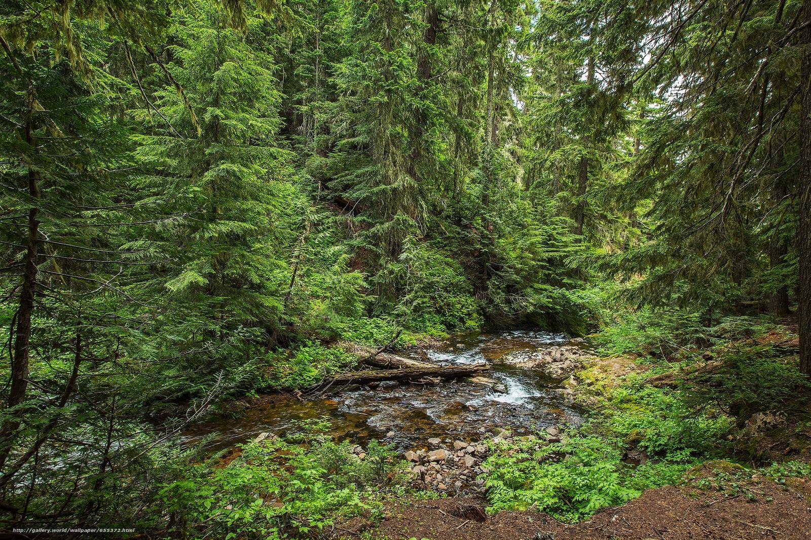 下载壁纸 河,  森林,  树,  性质 免费为您的桌面分辨率的壁纸 2048x1365 — 图片 №655372