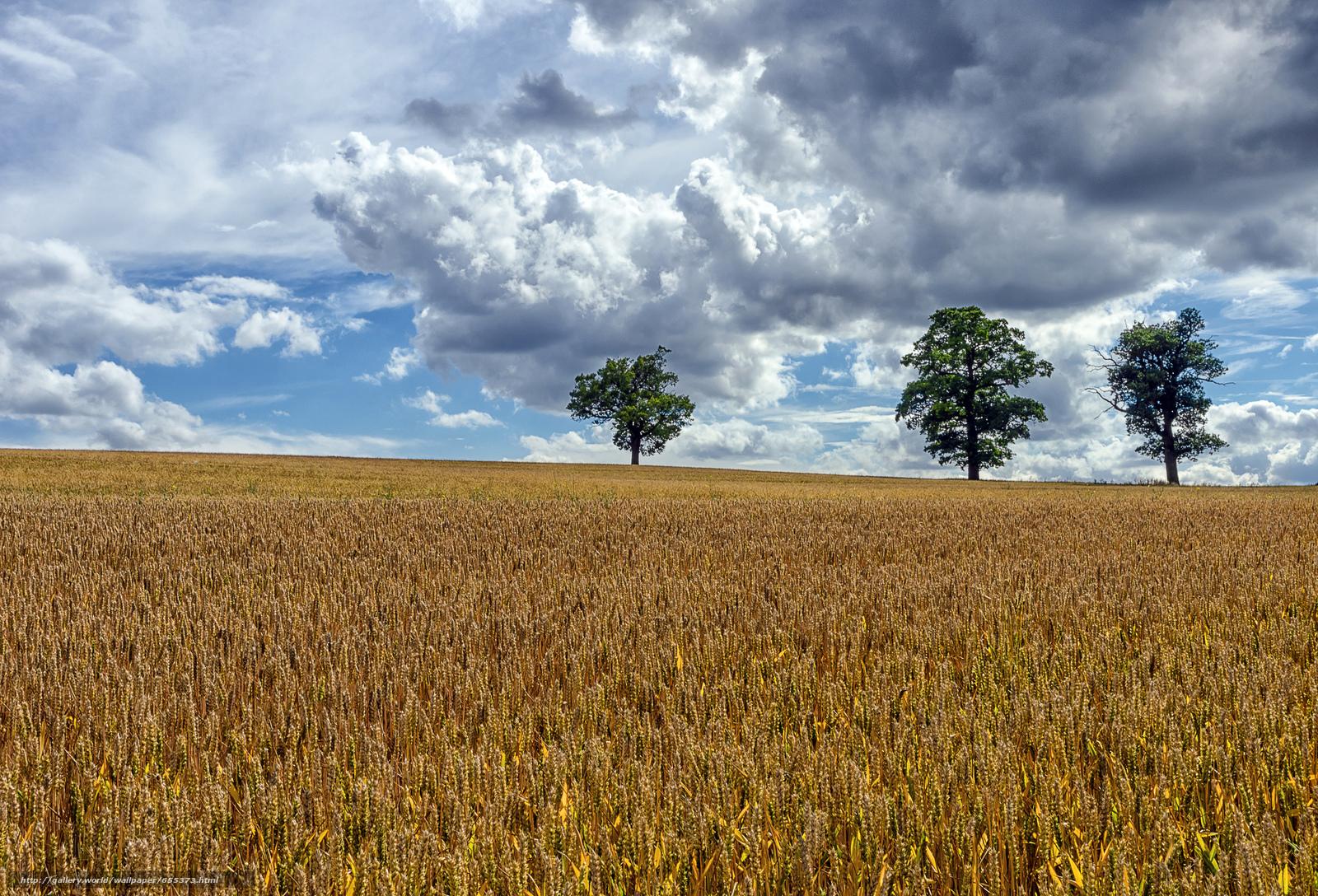 scaricare gli sfondi campo,  spighe di grano,  alberi,  paesaggio Sfondi gratis per la risoluzione del desktop 2048x1393 — immagine №655373