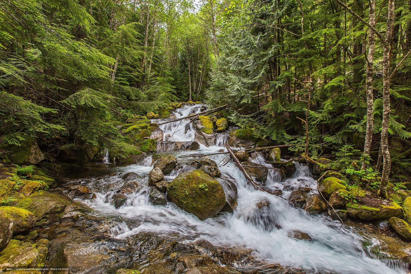 scaricare gli sfondi foresta,  alberi,  fiume,  cascata Sfondi gratis per la risoluzione del desktop 2048x1365 — immagine №655376