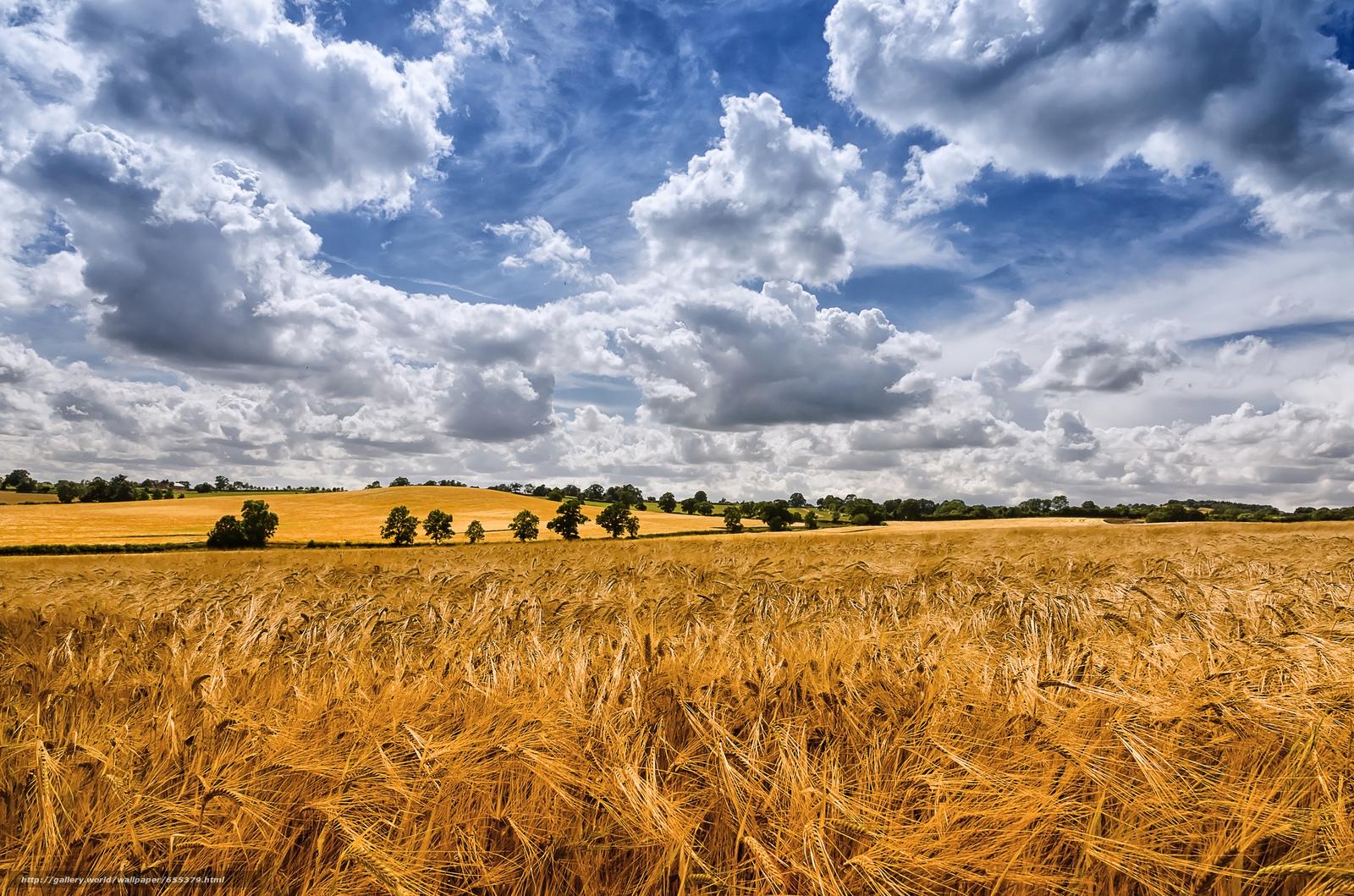 scaricare gli sfondi campo,  spighe di grano,  nuvole,  alberi Sfondi gratis per la risoluzione del desktop 2048x1356 — immagine №655379