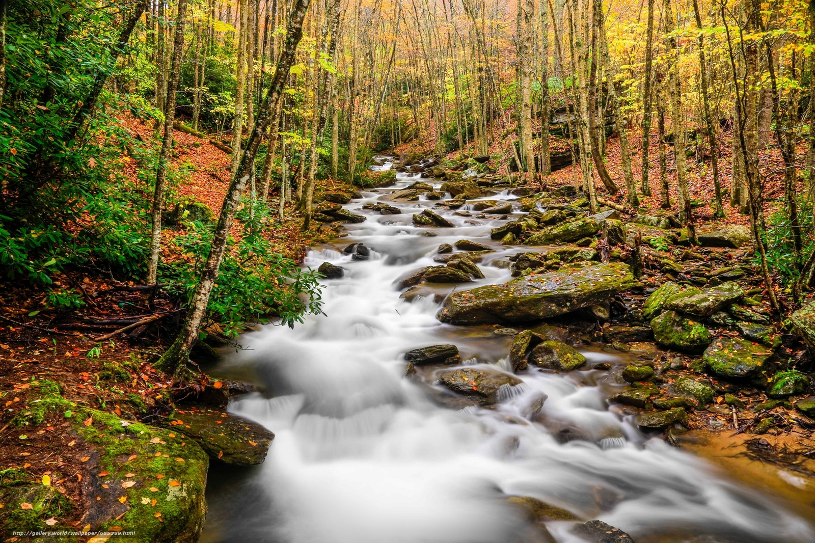 Скачать обои Pond Creek,  Beech Mountain,  North Carolina,  осень бесплатно для рабочего стола в разрешении 2048x1365 — картинка №655389