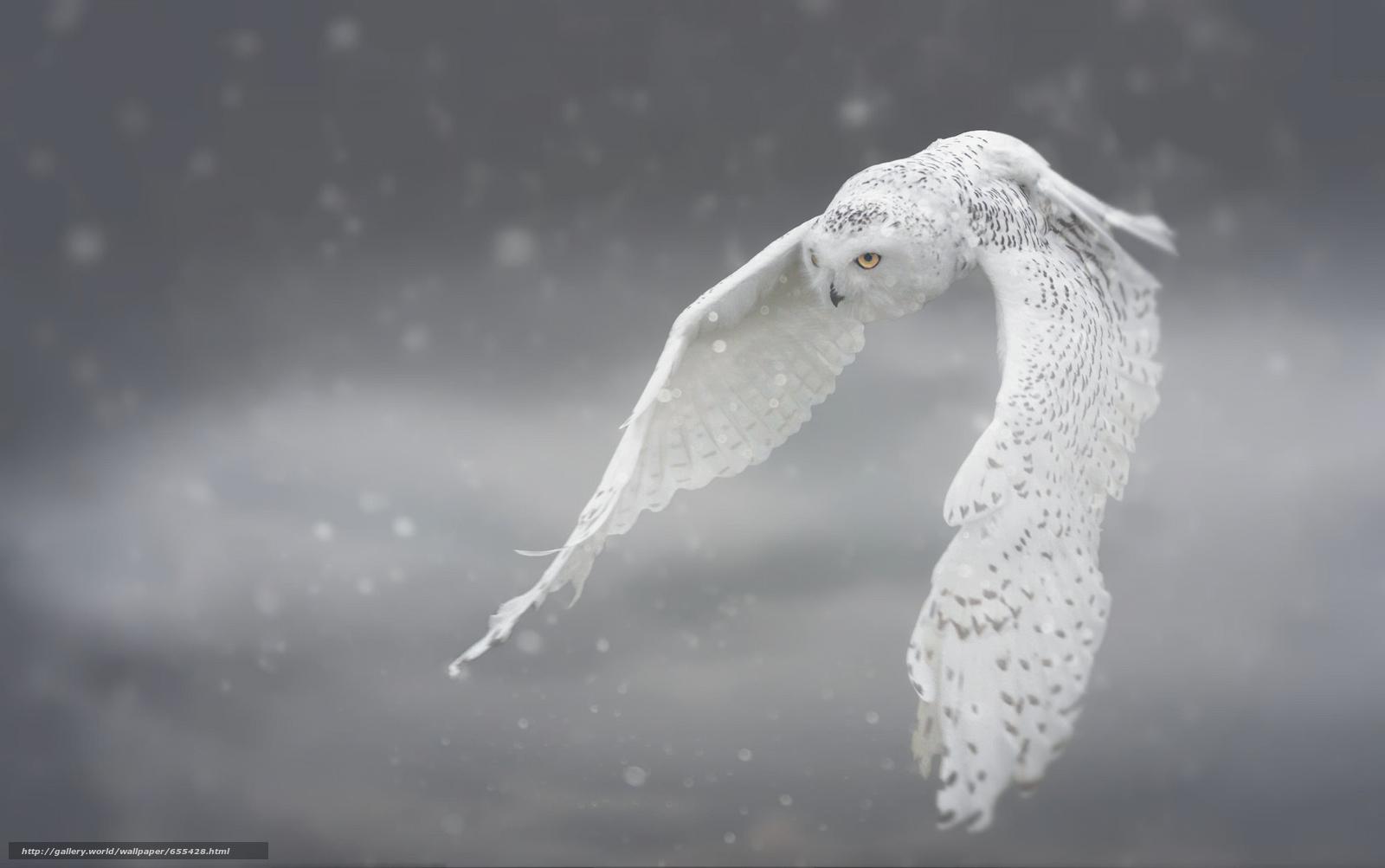 Скачать обои полярная сова,  белая сова,  сова,  птица бесплатно для рабочего стола в разрешении 2000x1254 — картинка №655428