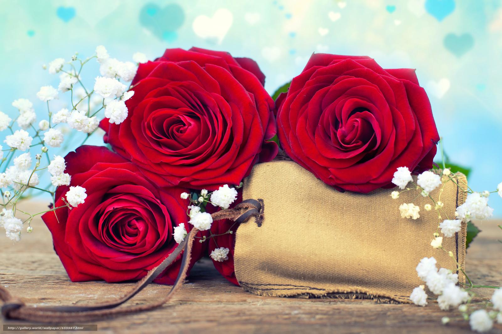 scaricare gli sfondi Roses,  gypsophila,  GERMOGLI Sfondi gratis per la risoluzione del desktop 6361x4241 — immagine №655987