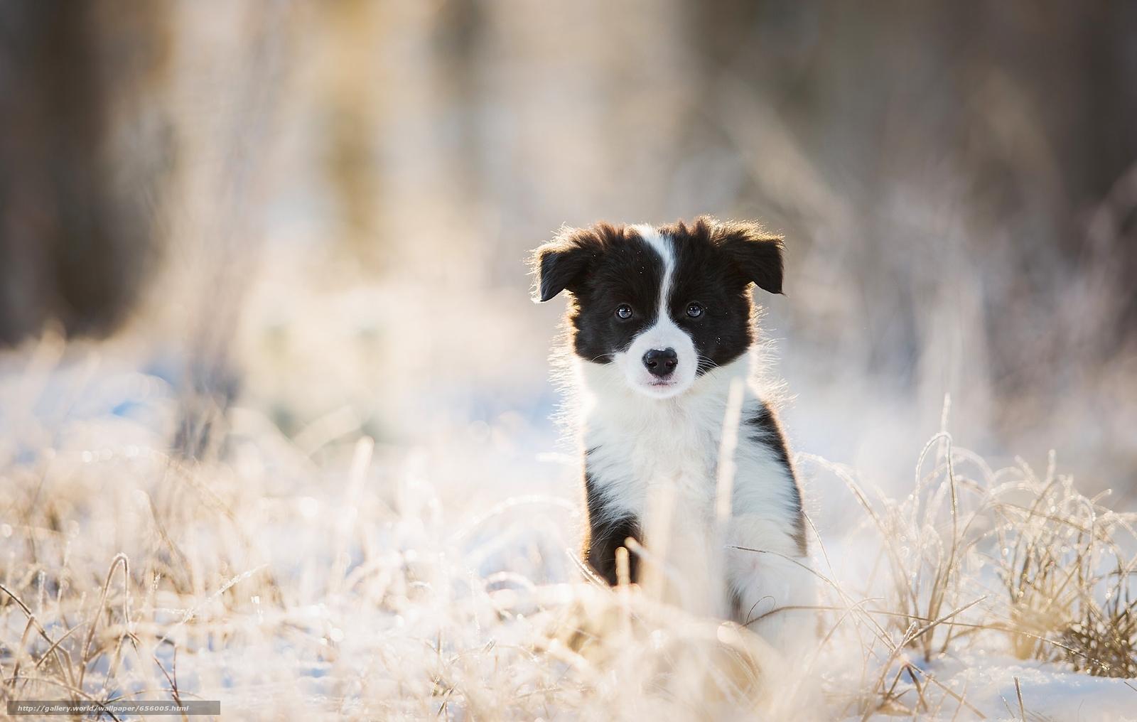 Tlcharger fond d 39 ecran chiot chien voir hiver fonds d for Fond ecran chiot