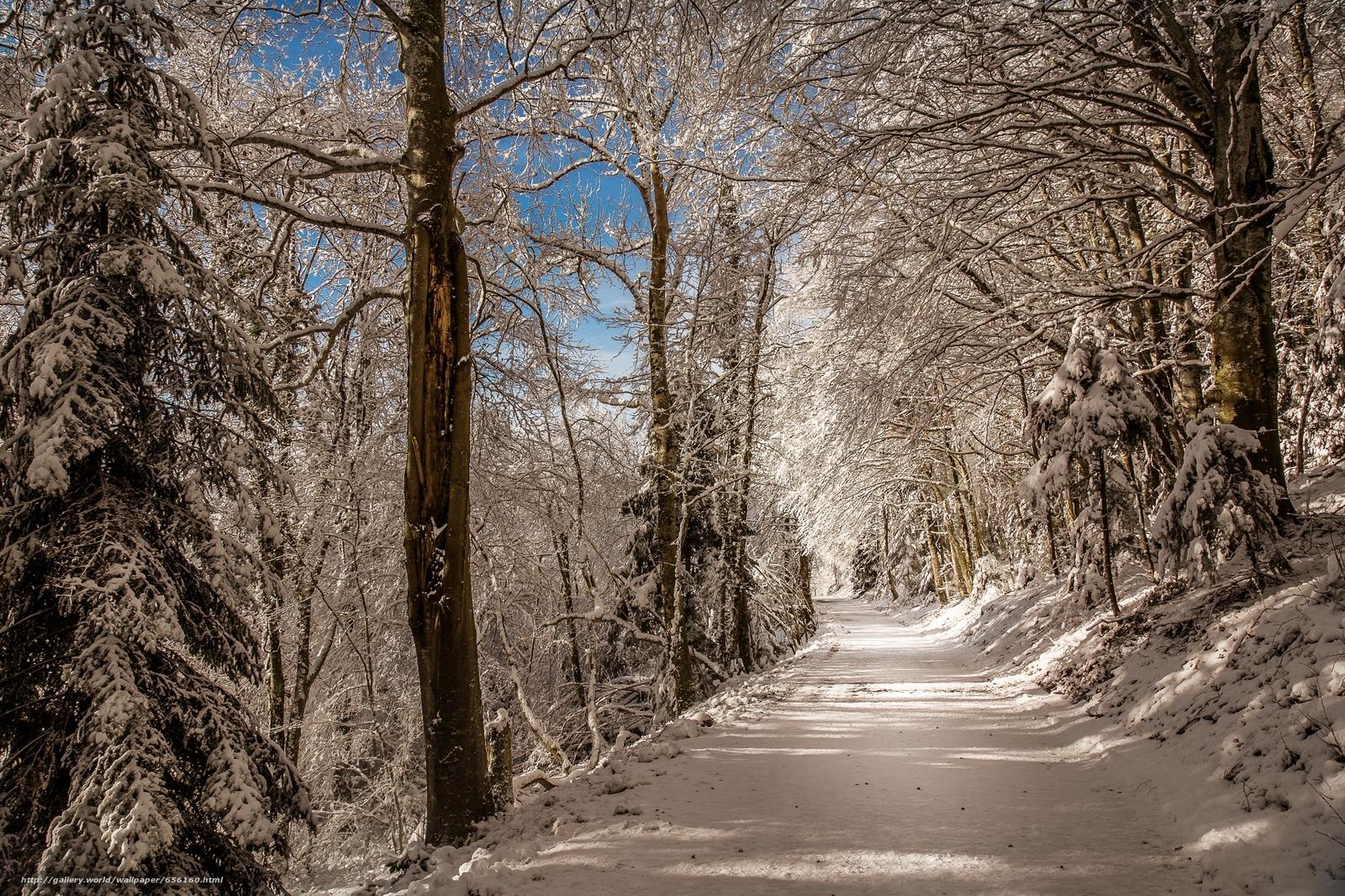 scaricare gli sfondi inverno,  foresta,  stradale,  alberi Sfondi gratis per la risoluzione del desktop 2000x1333 — immagine №656160