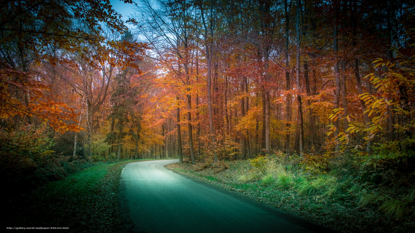 Descargar gratis otoño,  carretera,  bosque,  árboles Fondos de escritorio en la resolucin 3641x2048 — imagen №656162