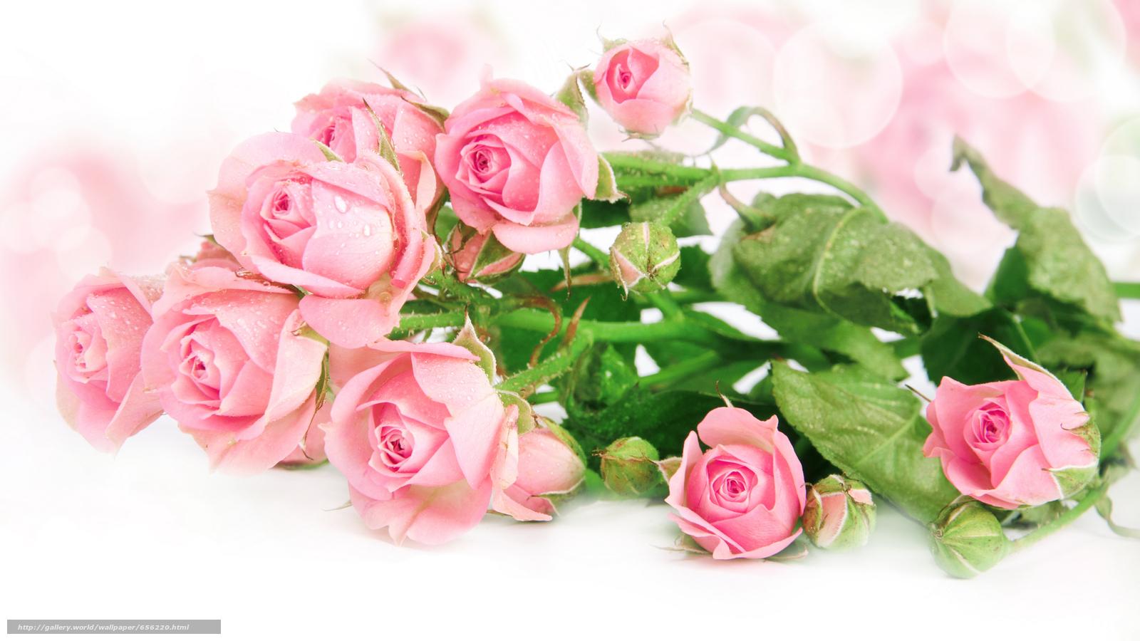 Скачать обои обои от Kisenok,  розы,  розовые,  цветы бесплатно для рабочего стола в разрешении 7002x3939 — картинка №656220