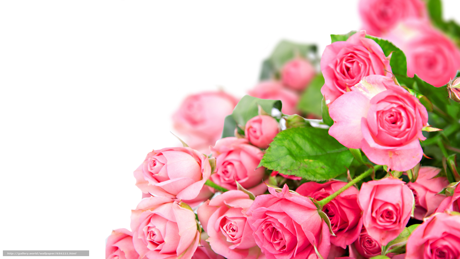 Download wallpaper Personas by Kisenok,  Roses,  pink,  Flowers free desktop wallpaper in the resolution 5549x3129 — picture №656221