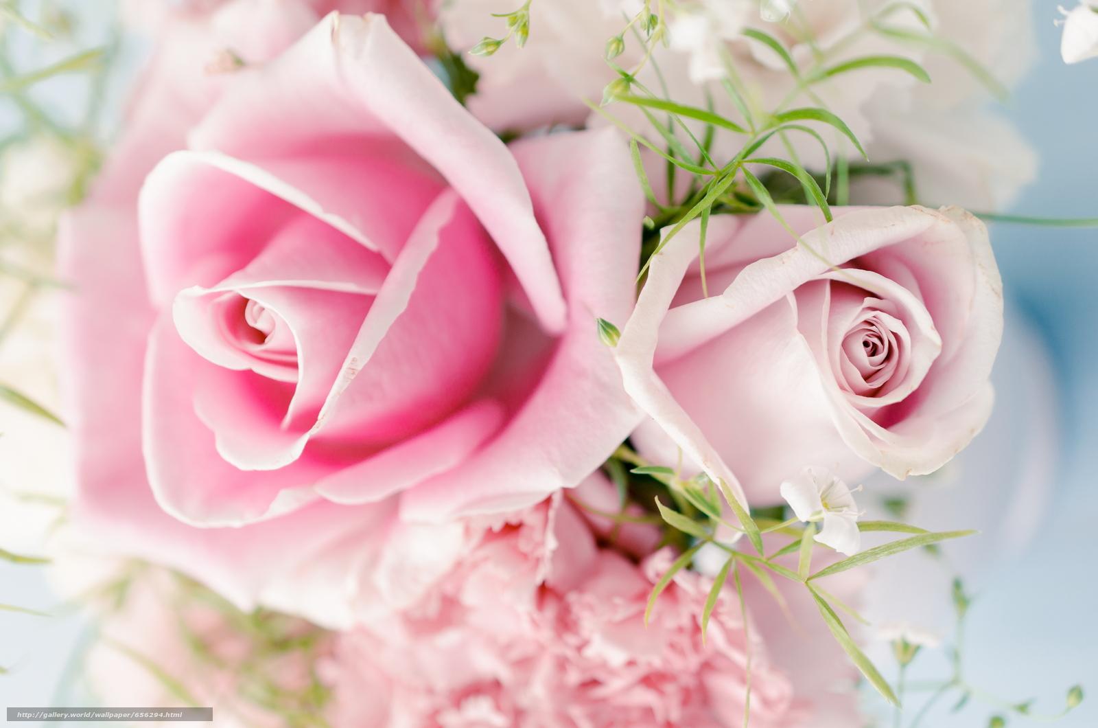 Скачать обои обои от Kisenok,  розы,  розовые,  цветы бесплатно для рабочего стола в разрешении 6040x4000 — картинка №656294