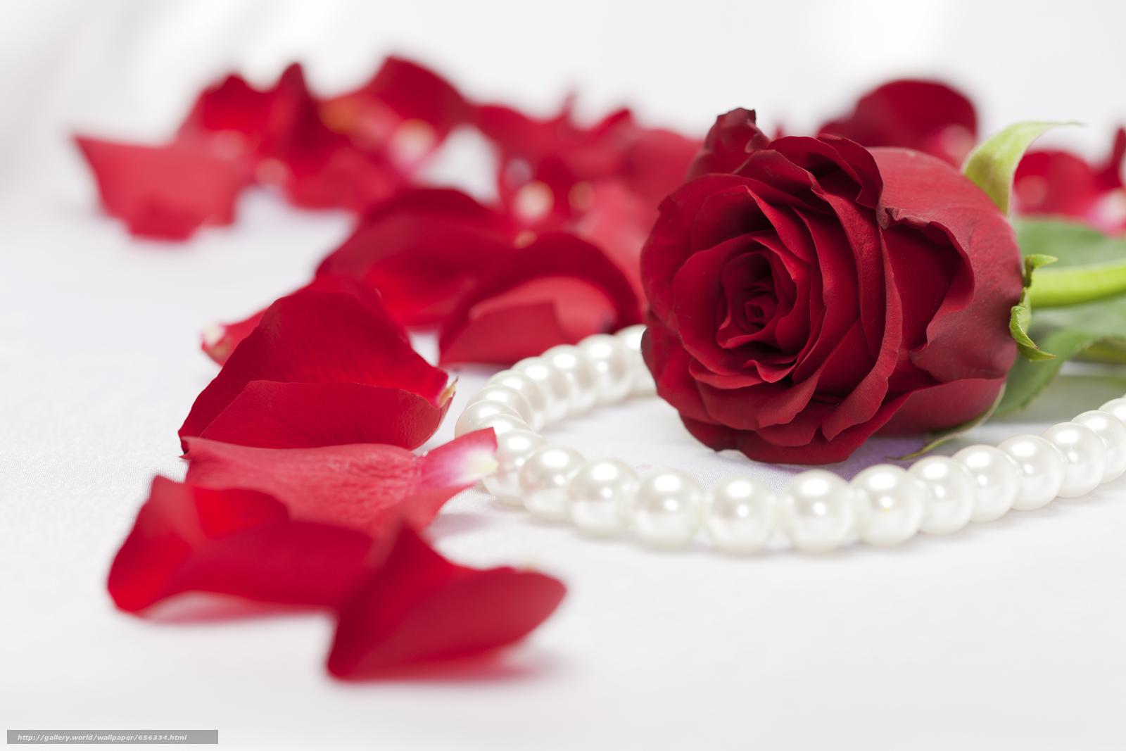 Скачать обои день святого валентина,  день всех влюбленных,  праздник бесплатно для рабочего стола в разрешении 5616x3744 — картинка №656334