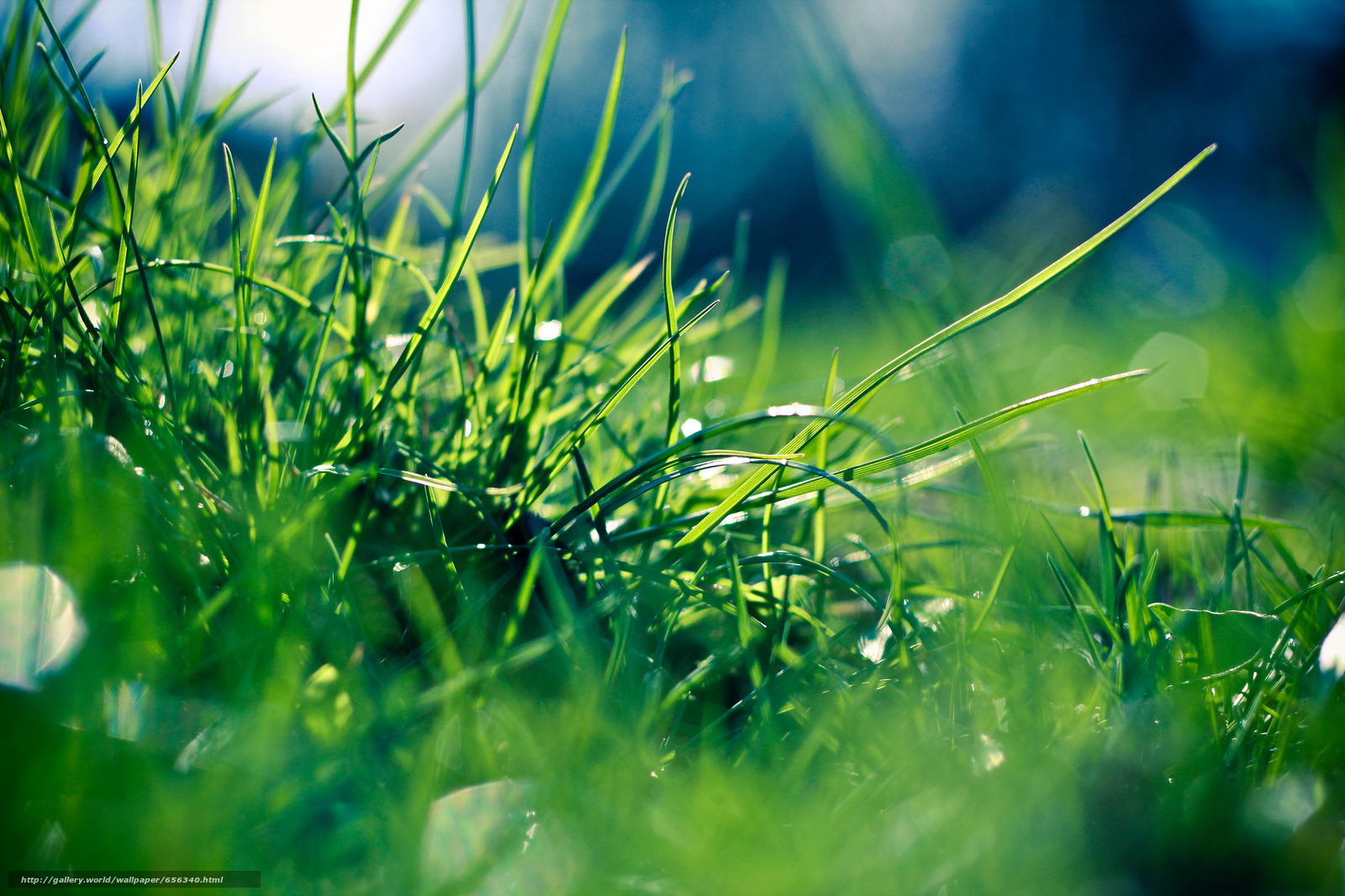 Download wallpaper grass,  dew,  Macro free desktop wallpaper in the resolution 2048x1365 — picture №656340
