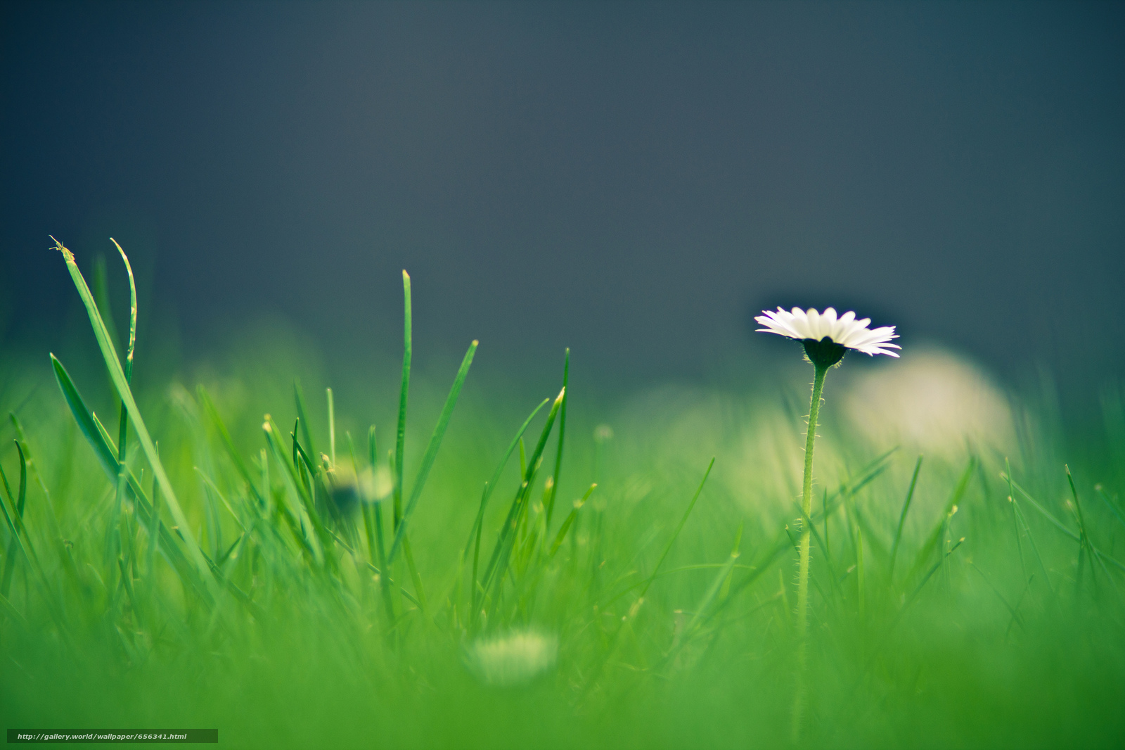 Download wallpaper grass,  flower,  Macro free desktop wallpaper in the resolution 2048x1365 — picture №656341