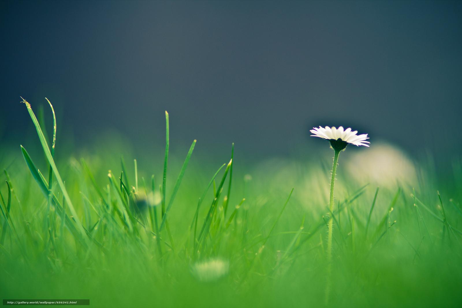 Скачать обои трава,  цветок,  макро бесплатно для рабочего стола в разрешении 2048x1365 — картинка №656341