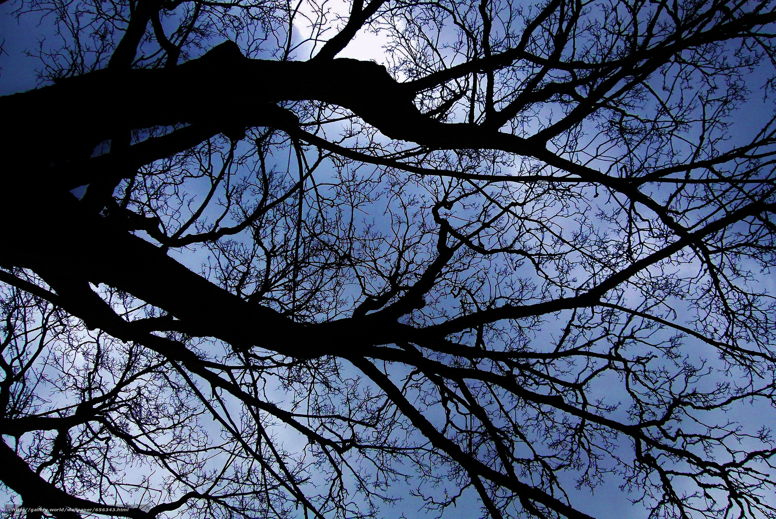Download wallpaper sky,  tree,  BRANCH,  nature free desktop wallpaper in the resolution 2048x1370 — picture №656343