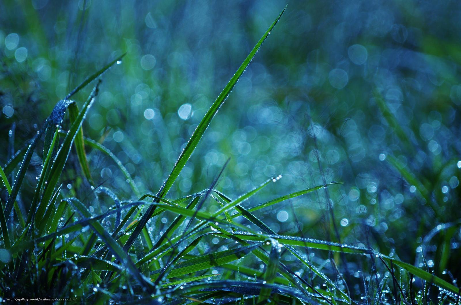 Скачать обои трава,  роса,  макро бесплатно для рабочего стола в разрешении 2048x1356 — картинка №656357