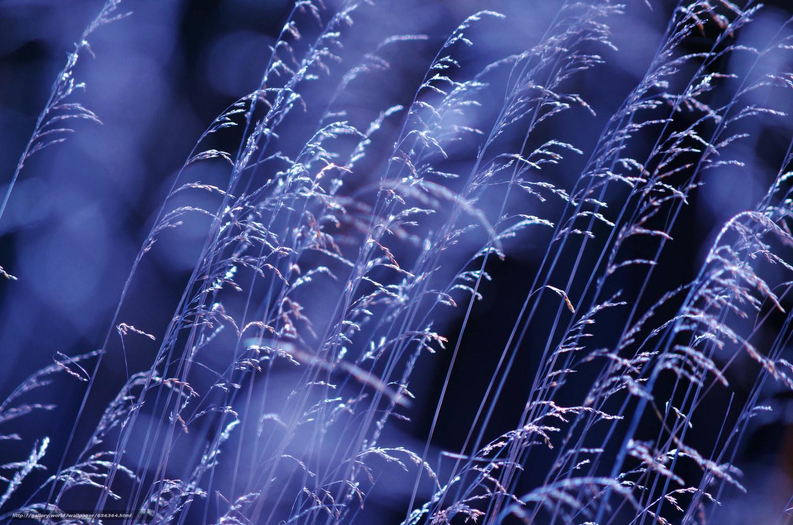 Tlcharger Fond d'ecran herbe,  herbe,  Macro Fonds d'ecran gratuits pour votre rsolution du bureau 2048x1356 — image №656364
