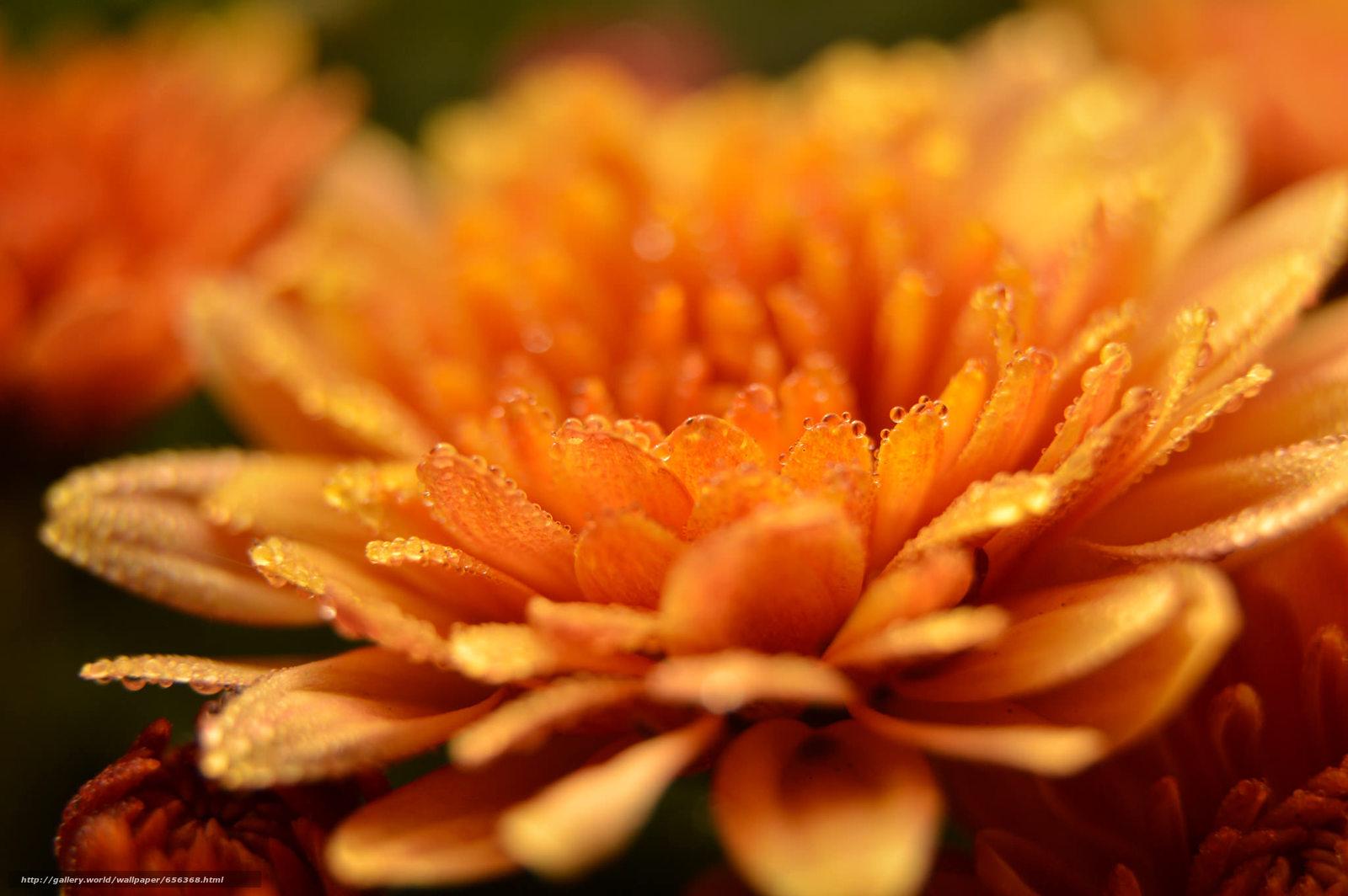 壁紙をダウンロード 花,  フローラ,  マクロ デスクトップの解像度のための無料壁紙 2048x1362 — 絵 №656368