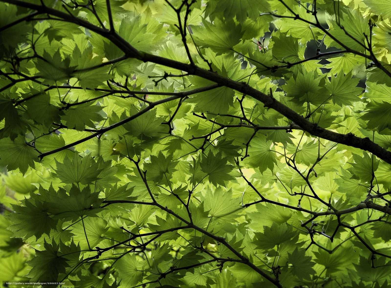 Download wallpaper BRANCH,  foliage,  tree,  nature free desktop wallpaper in the resolution 2048x1508 — picture №656651
