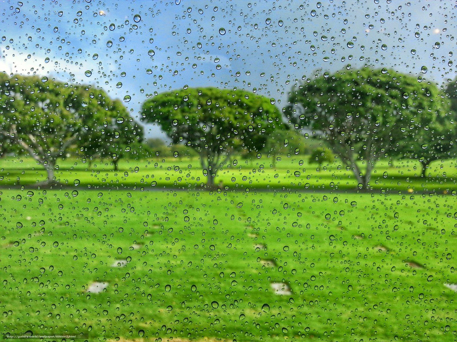 Скачать обои стекло,  капли,  поле,  деревья бесплатно для рабочего стола в разрешении 3264x2448 — картинка №656661