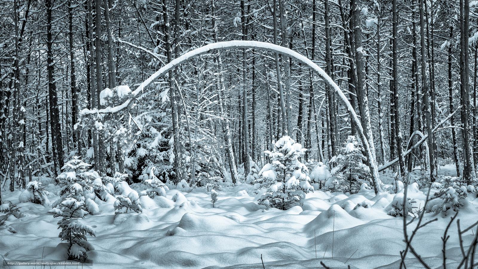 scaricare gli sfondi inverno,  foresta,  alberi,  derive Sfondi gratis per la risoluzione del desktop 4720x2655 — immagine №656665