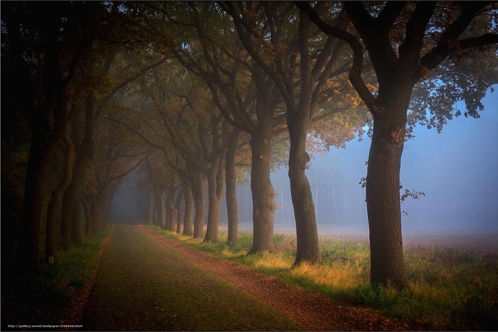 scaricare gli sfondi foresta,  stradale,  alberi,  paesaggio Sfondi gratis per la risoluzione del desktop 2028x1355 — immagine №656968