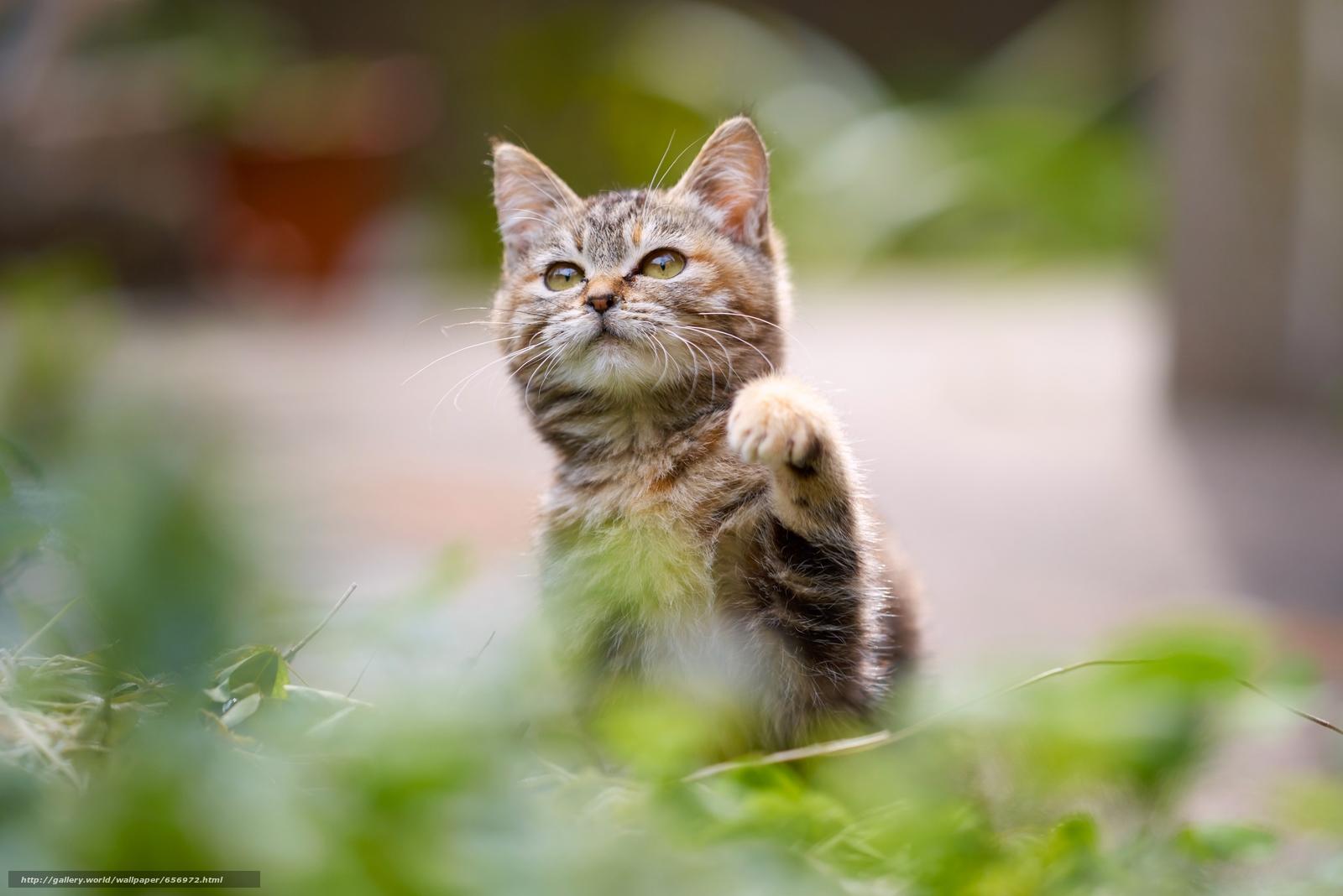 scaricare gli sfondi gattino,  bambino,  Piede Sfondi gratis per la risoluzione del desktop 6049x4037 — immagine №656972