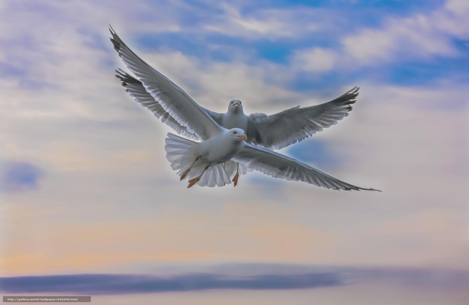 Download Hintergrund Himmel,  SEAGULLS,  Flucht Freie desktop Tapeten in der Auflosung 2048x1334 — bild №656996
