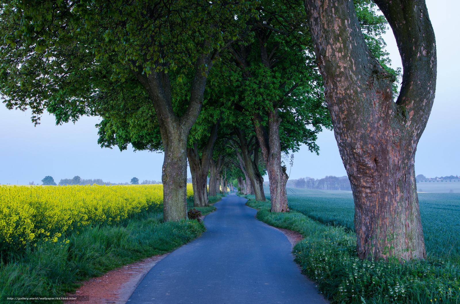 下载壁纸 道路,  场,  树,  景观 免费为您的桌面分辨率的壁纸 2048x1356 — 图片 №657000