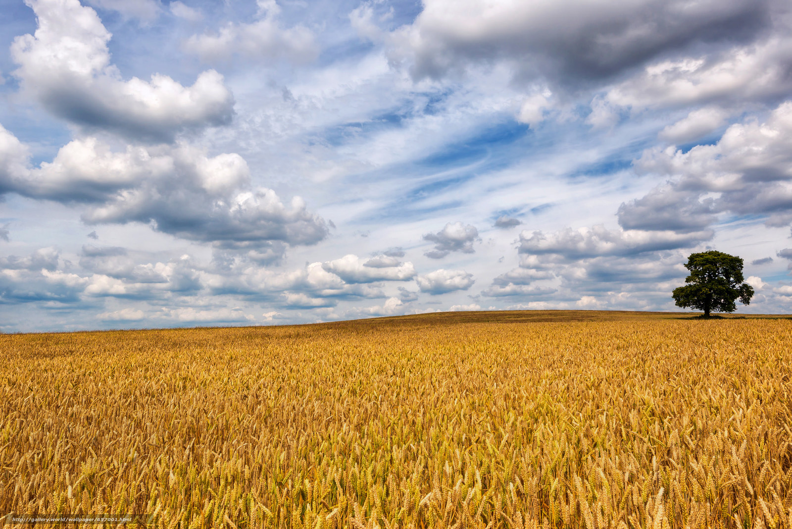 Скачать обои поле,  колосья,  небо,  облака бесплатно для рабочего стола в разрешении 2048x1367 — картинка №657001