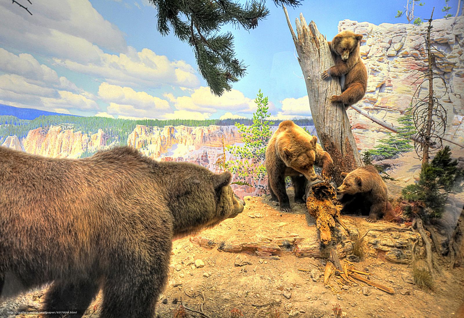scaricare gli sfondi Orsi,  rosolare,  animali Sfondi gratis per la risoluzione del desktop 2048x1401 — immagine №657039