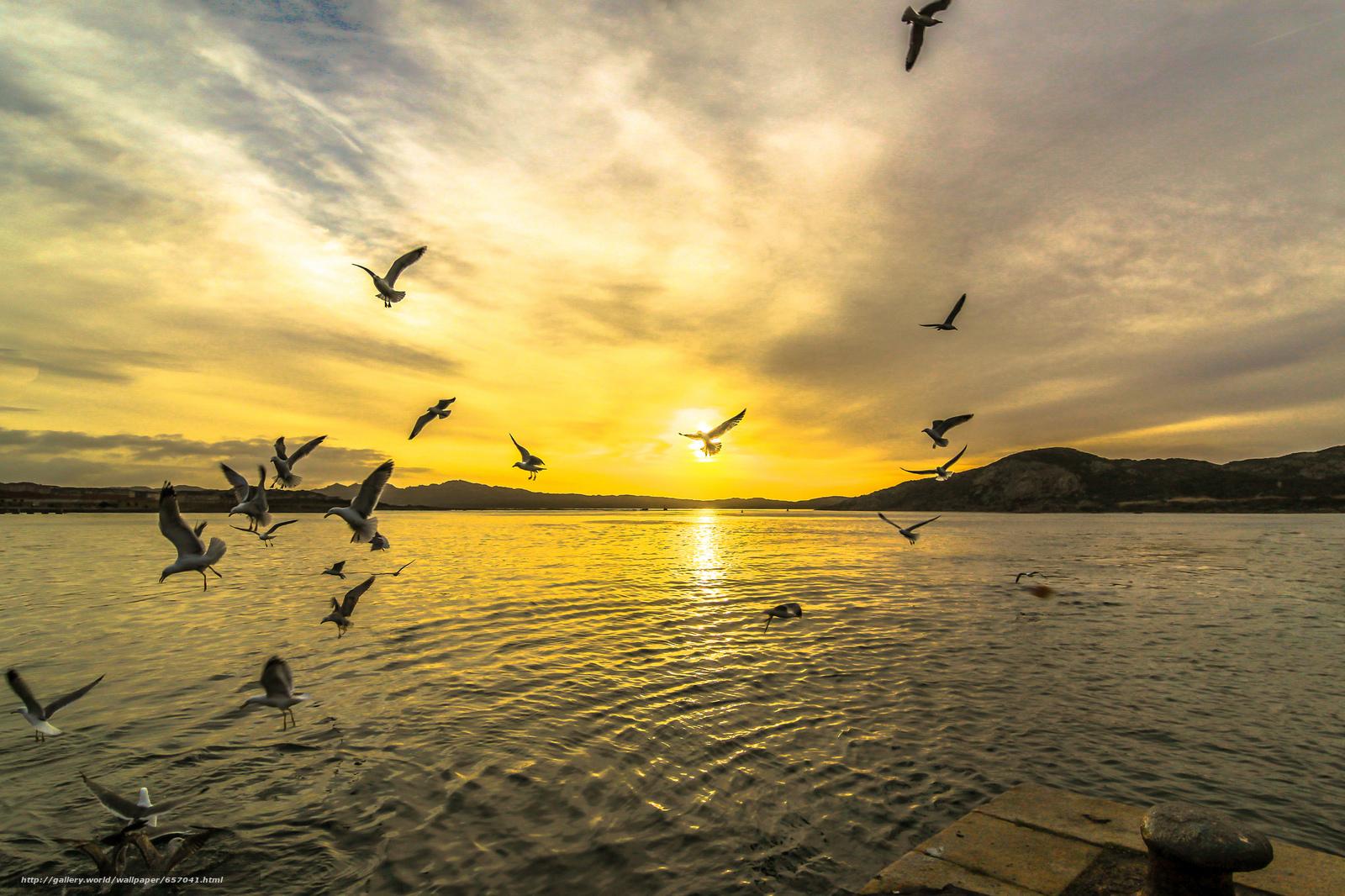 Скачать обои закат,  озеро,  чайки,  пейзаж бесплатно для рабочего стола в разрешении 2048x1365 — картинка №657041