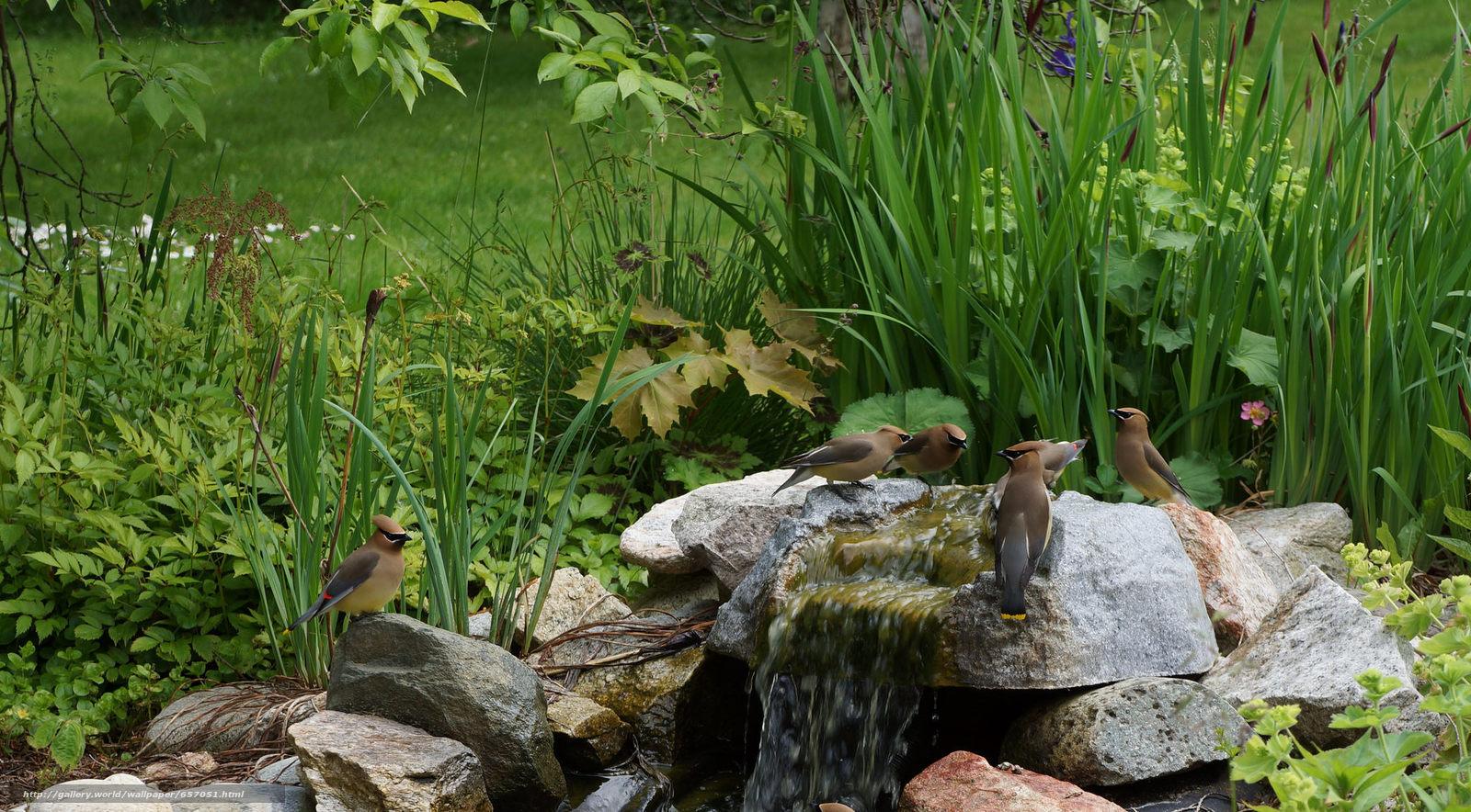 Скачать обои камни,  водопад,  растения,  птицы бесплатно для рабочего стола в разрешении 2048x1132 — картинка №657051