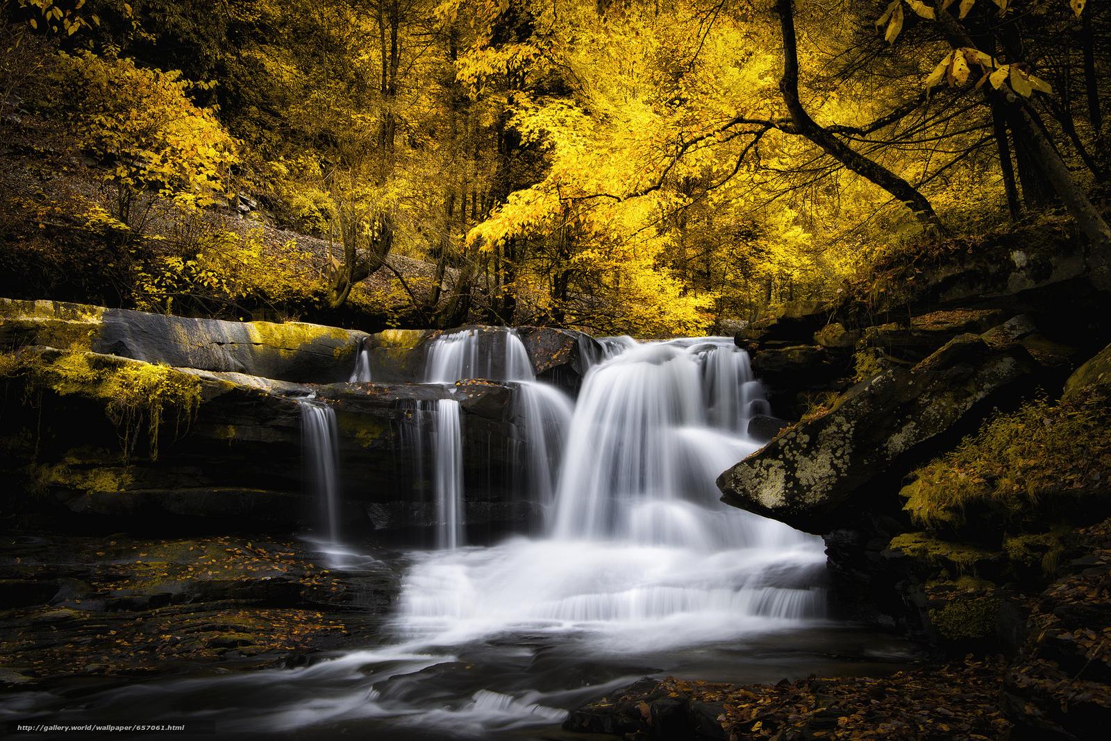 壁紙をダウンロード 秋,  小さな川,  森,  木 デスクトップの解像度のための無料壁紙 2048x1367 — 絵 №657061