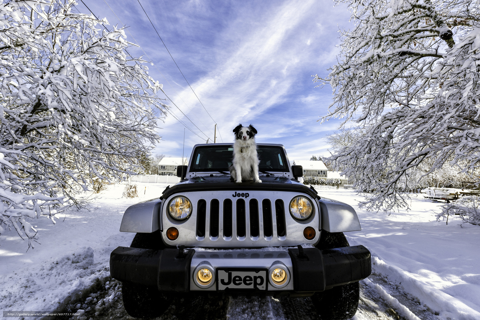 Download wallpaper Jeep Wrangler,  Jeep,  machine,  dog free desktop wallpaper in the resolution 2048x1367 — picture №657717