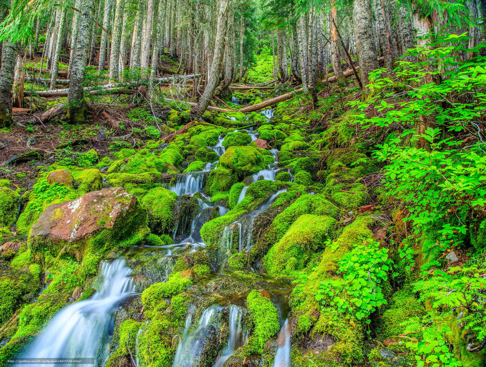 Download wallpaper forest,  trees,  small river,  waterfall free desktop wallpaper in the resolution 2048x1548 — picture №657720