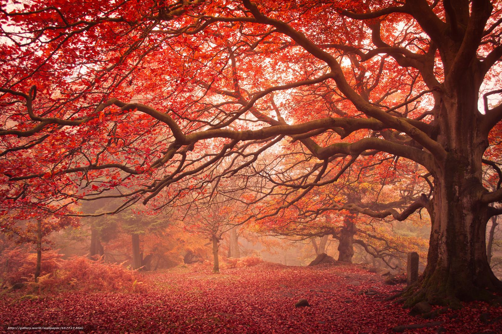 scaricare gli sfondi autunno,  foresta,  alberi,  nebbia Sfondi gratis per la risoluzione del desktop 2048x1365 — immagine №657727