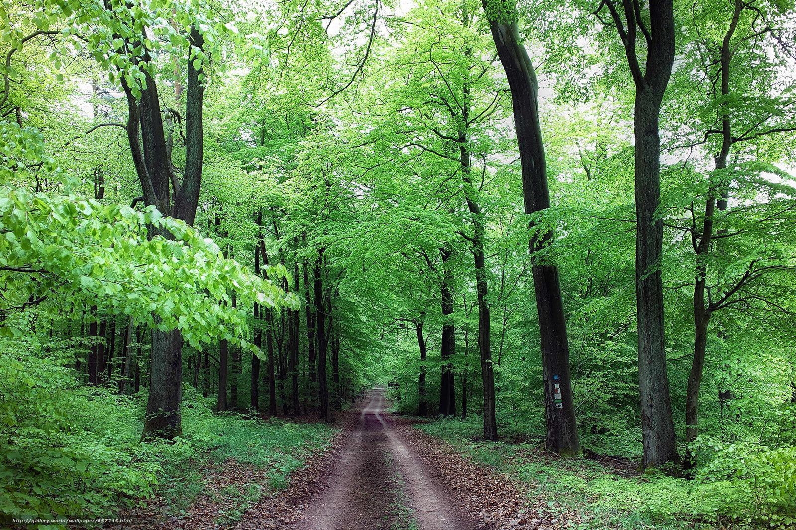 Download wallpaper forest,  trees,  road,  nature free desktop wallpaper in the resolution 2048x1365 — picture №657745