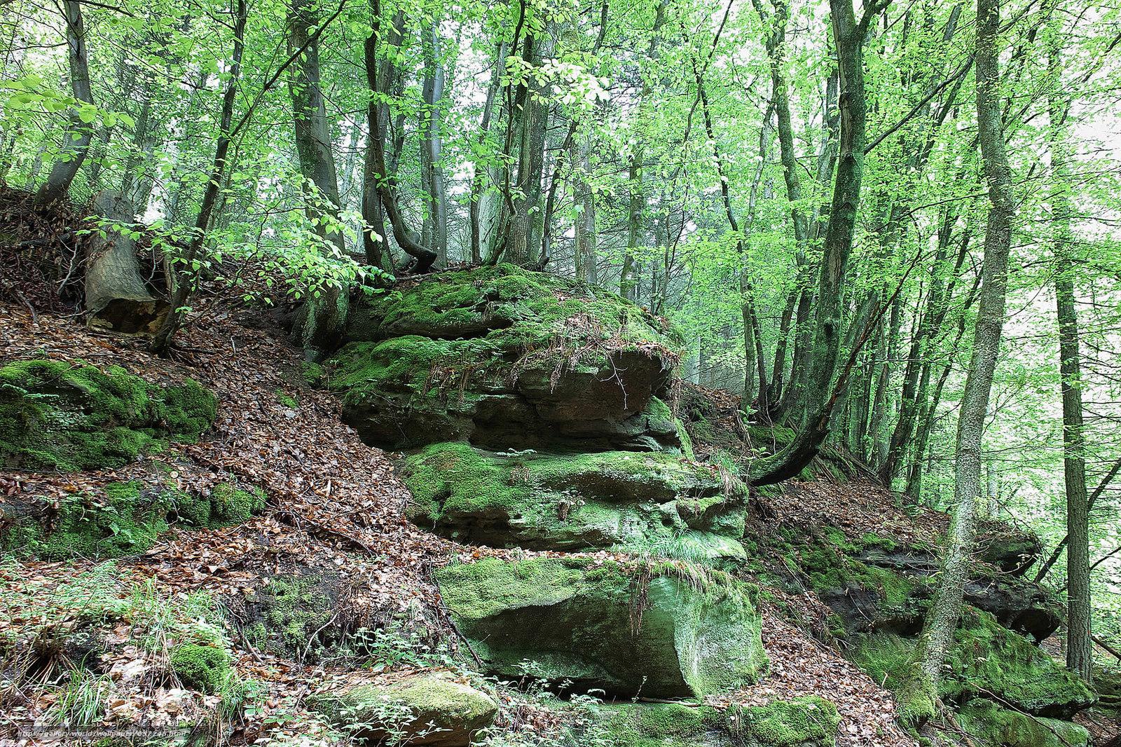 壁紙をダウンロード 森,  木,  石,  自然 デスクトップの解像度のための無料壁紙 2048x1365 — 絵 №657746