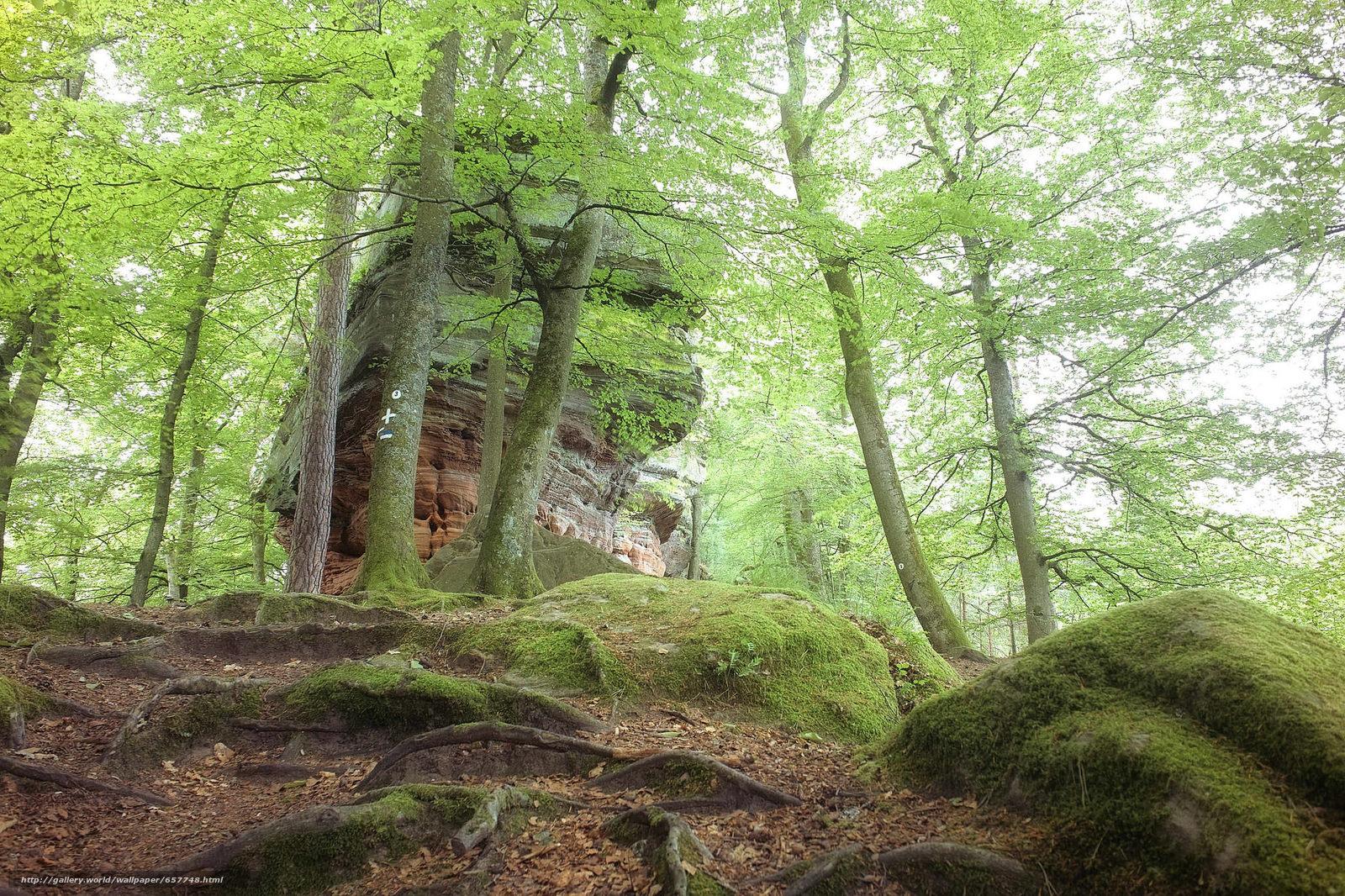 Tlcharger Fond d'ecran forêt,  arbres,  Rocks,  nature Fonds d'ecran gratuits pour votre rsolution du bureau 2048x1365 — image №657748
