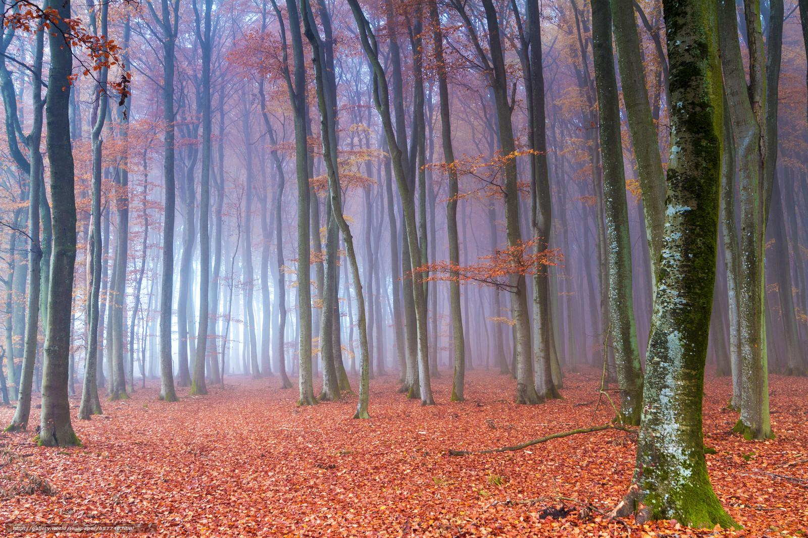 scaricare gli sfondi autunno,  foresta,  alberi,  nebbia Sfondi gratis per la risoluzione del desktop 2048x1365 — immagine №657749