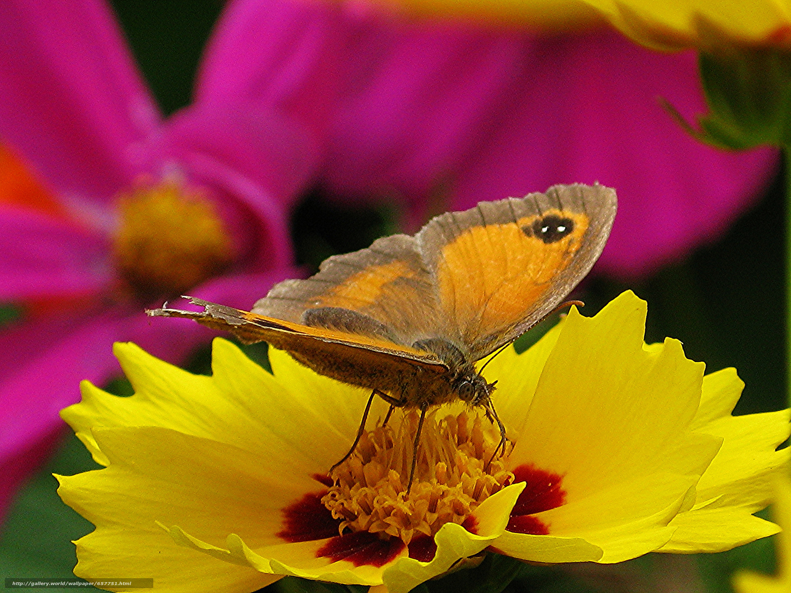 Download wallpaper flower,  butterfly,  Macro free desktop wallpaper in the resolution 2048x1536 — picture №657751