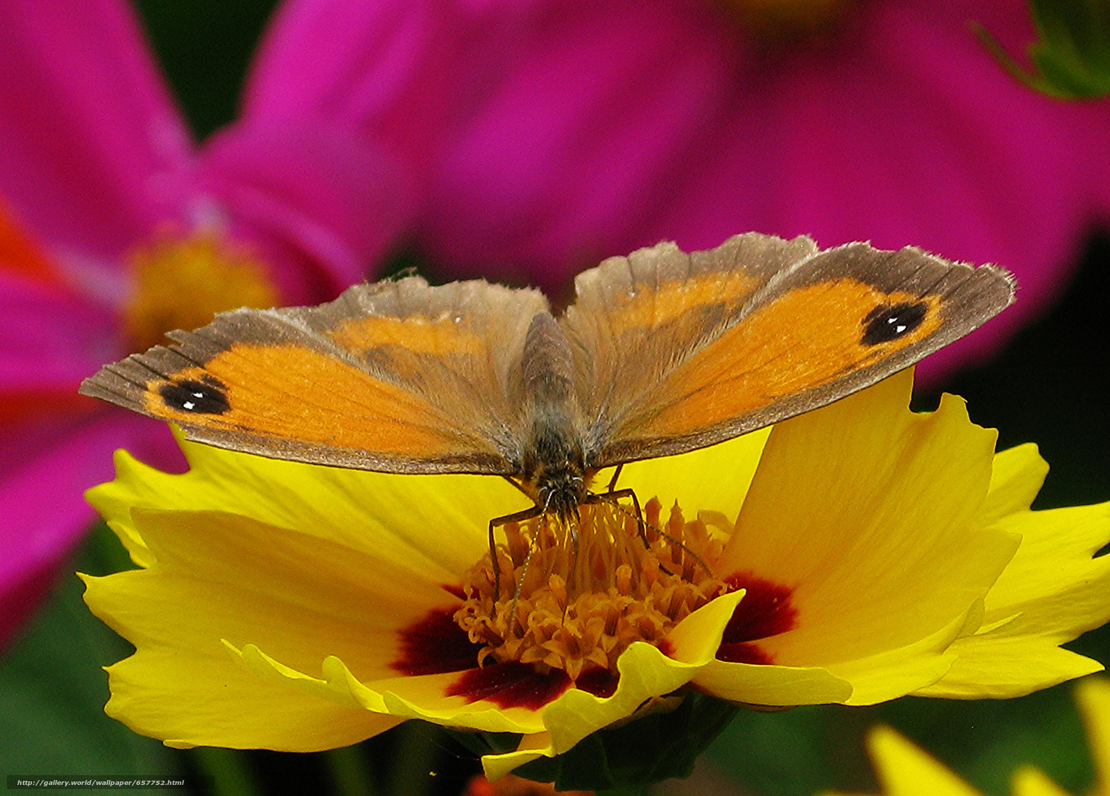 Download wallpaper flower,  butterfly,  Macro free desktop wallpaper in the resolution 2048x1470 — picture №657752