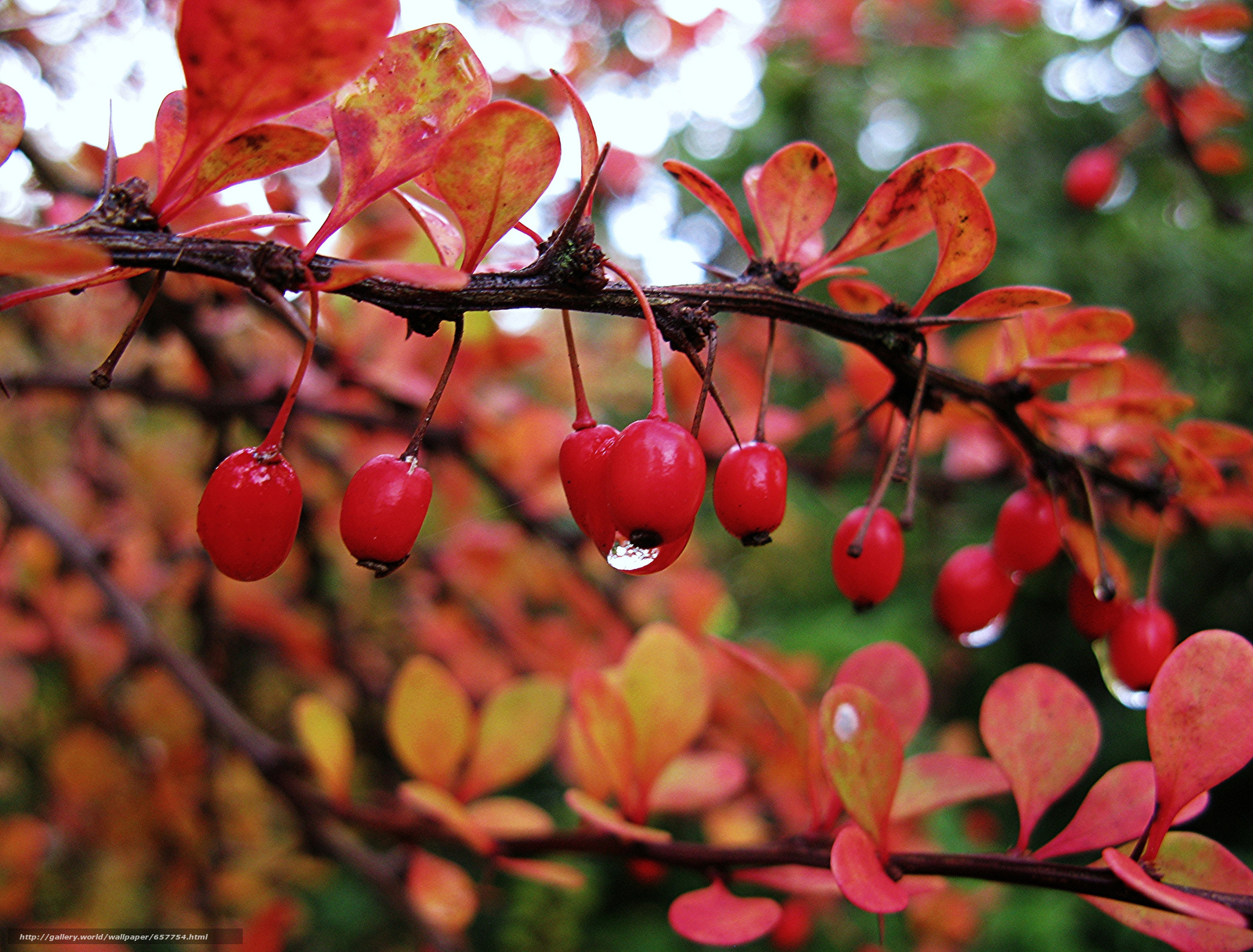 Download wallpaper branch,  BERRY,  fruit,  foliage free desktop wallpaper in the resolution 2048x1556 — picture №657754