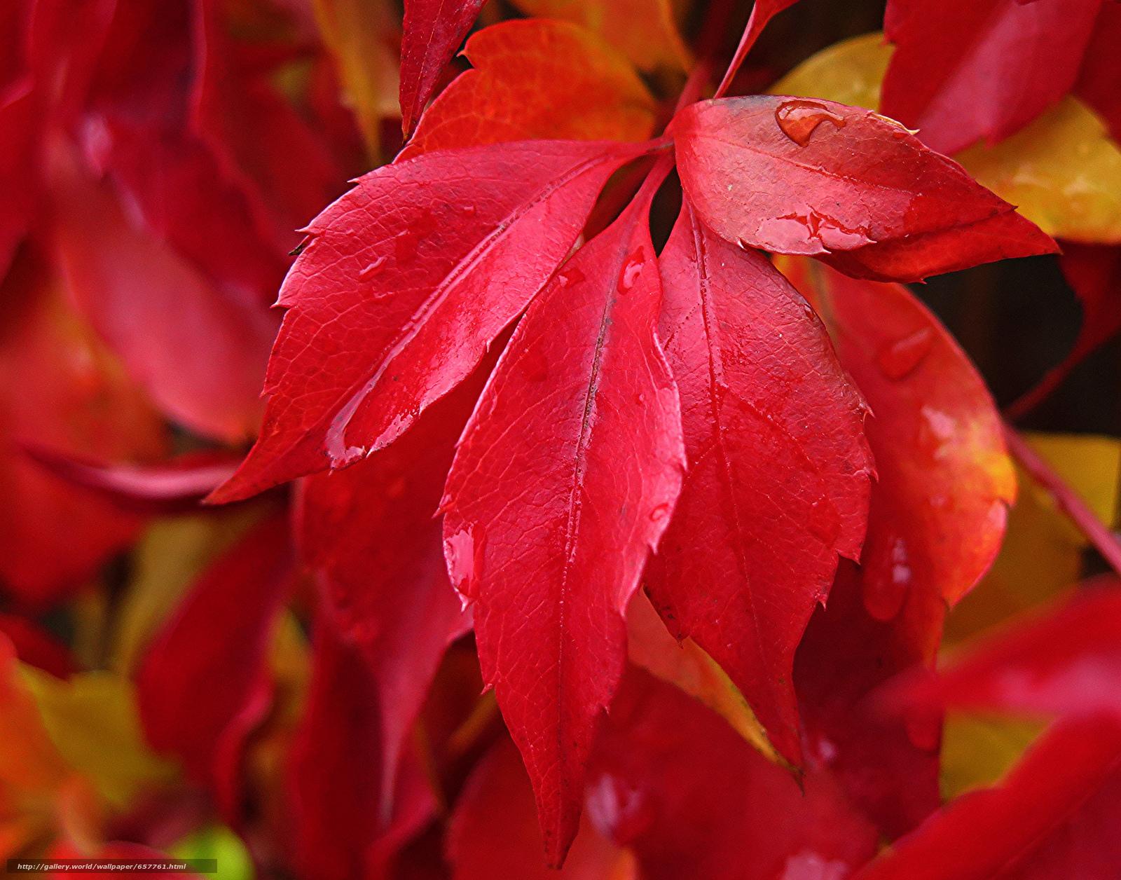 Скачать обои ветка,  листья,  осень,  капли бесплатно для рабочего стола в разрешении 2048x1608 — картинка №657761